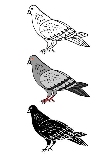 satz von taube vogel tier handgezeichnete vektor-illustration-design - wildtaube stock-grafiken, -clipart, -cartoons und -symbole