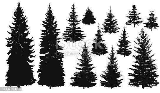 Set of silhouettes of pine trees or fir trees, EPS 8.