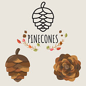 Set of Pinecones design in different style(colored and line art). Vector illustration.