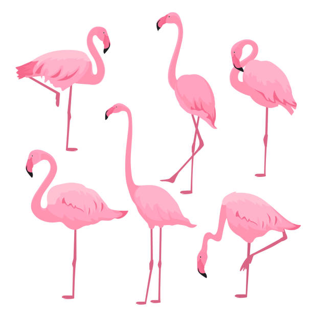 a set of pink flamingos in various poses - flamingo stock illustrations