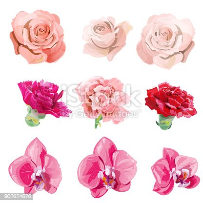 Set of pink, red flowers and buds close-up; rose, carnation, orchid Phalaenopsis on white background, digital draw realistic illustration in watercolor style, collection for design, vector