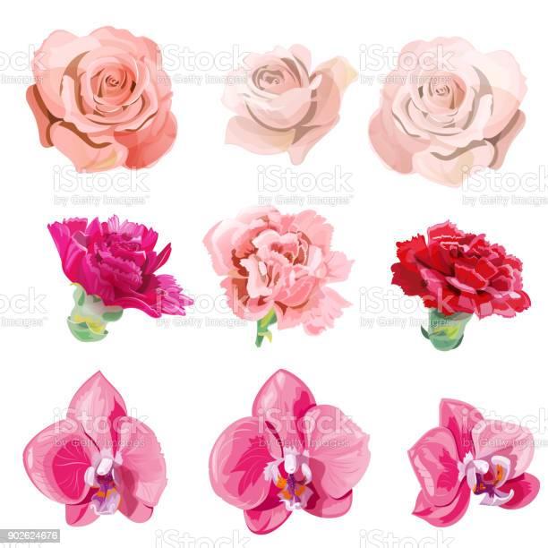 Set of pink red flowers and buds closeup rose carnation orchid on vector id902624676?b=1&k=6&m=902624676&s=612x612&h=edifgofzfgjj4 eerrnqlgpelwlmywcrajrxkrzsx2i=