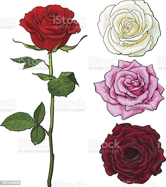 Set of pink white red rose top and side view vector id637909608?b=1&k=6&m=637909608&s=612x612&h=cvctw 3dfykgh3kiv6gnnyczxgd3snllfoxkmaod50y=