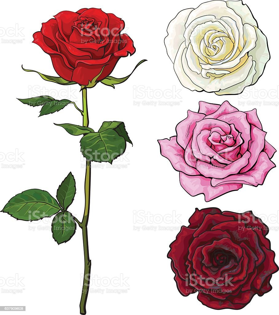 Set of pink, white, red rose, top and side view vector art illustration