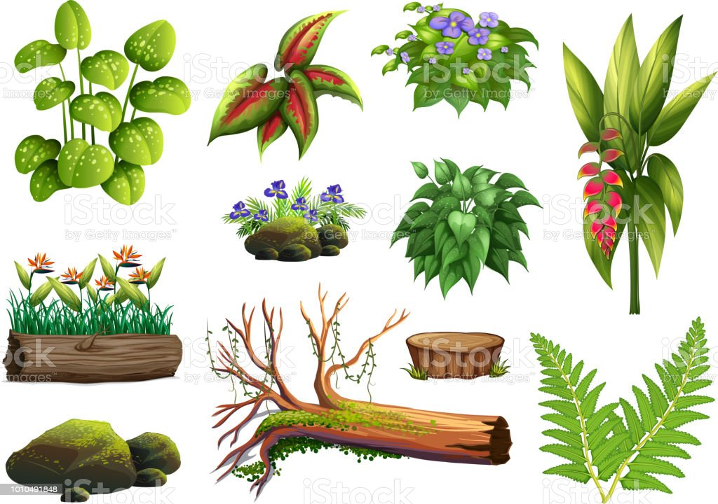 A set of plant element vector art illustration