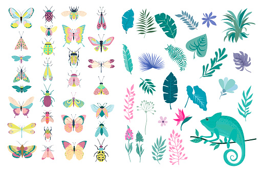 Set of plants and insects - beetles, butterflies, moths.
