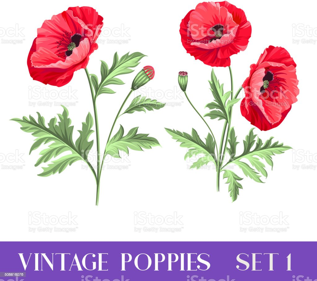 Set Of Poppy Flowers Elements Stock Vector Art More Images Of