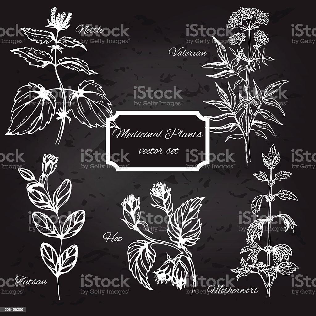 Ensemble De Plantes Médicinales Sur Tableau Noir Populaires