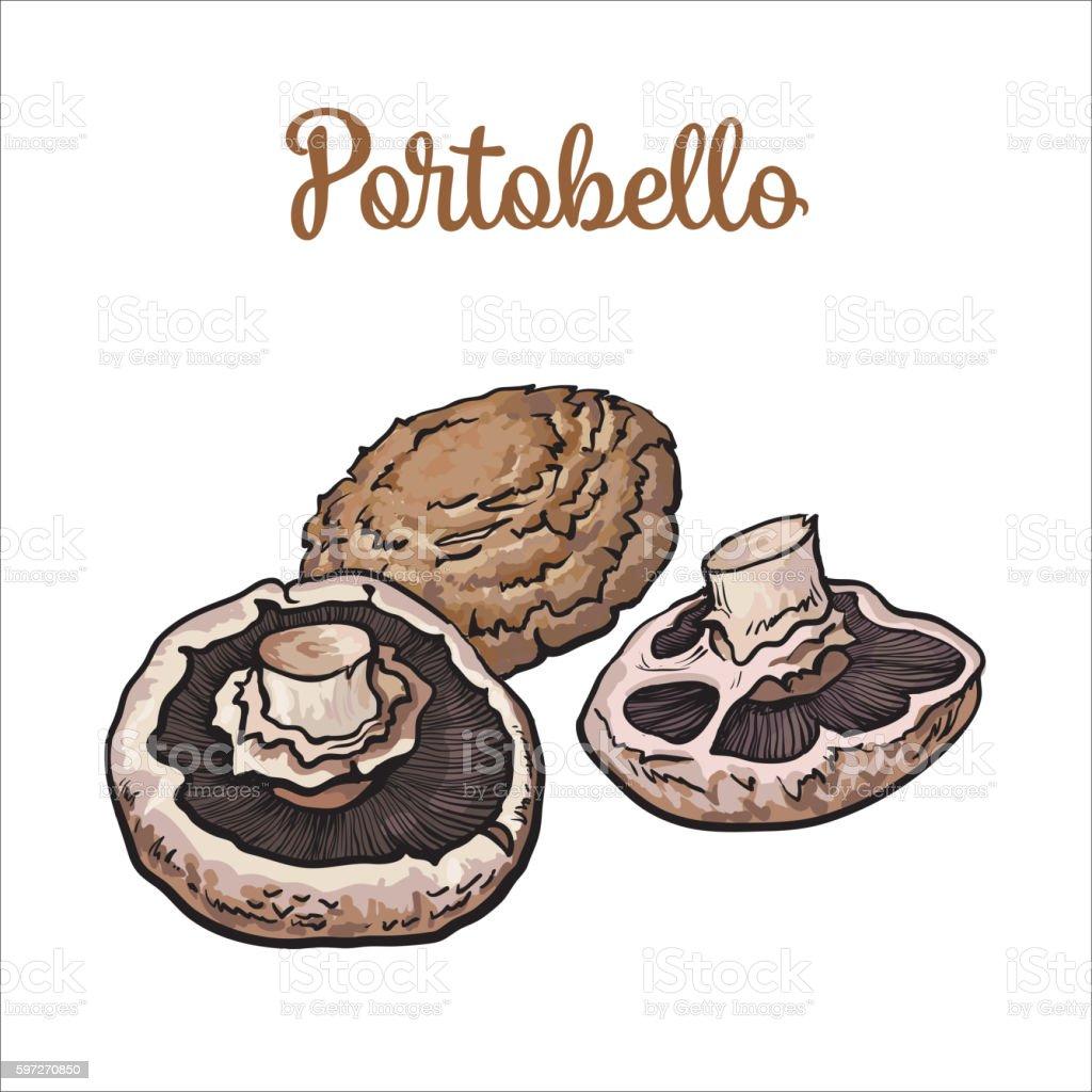 Set of portobello edible mushrooms Lizenzfreies set of portobello edible mushrooms stock vektor art und mehr bilder von botanik
