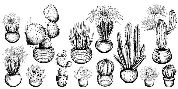 Set of potted cactus and succulent plants. Black and white sketchy collection. Hand drawn vector illustration.