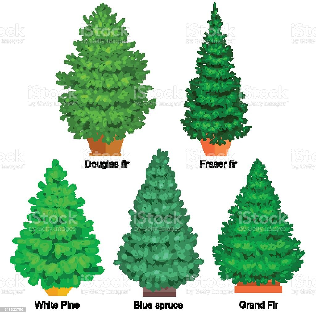 set of potted christmas vector tree like fir or pine royalty free set of potted - Potted Christmas Tree