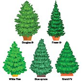 Set of potted christmas vector tree like fir or pine