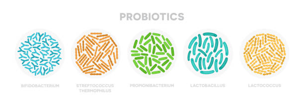 Set of probiotic bacteria. Good microorganisms concept isolated on white background. Propionibacterium, lactobacillus, lactococcus, bifidobacterium, streptococcus thermophilus, escherichia coli Vector illustration flat design of probiotic bacteria. Good microorganisms concept isolated on white background. lactobacillus stock illustrations