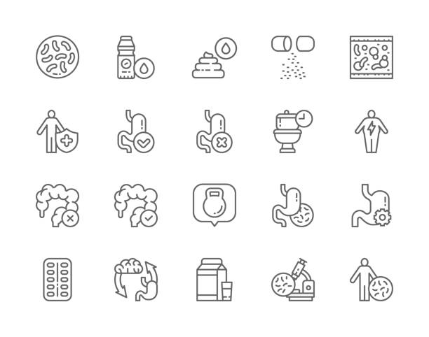 Set of Probiotic Line Icons. Lactobacilli, Bifidobacteria, Vitamins, Immune System,   Intestines, Stomach Treatment and more. Set of Probiotic Line Icons. Lactobacilli, Bifidobacteria, Vitamins, Immune System, Healthy Stomach, Abdominal Distension, Intestines, Stomach Treatment and more. lactobacillus stock illustrations