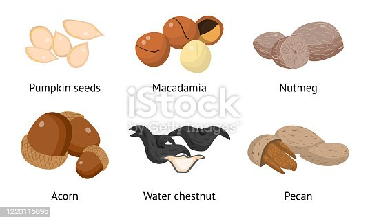 istock Set of pumpkin seeds, macadamia, nutmeg, acorn, water chestnut, pecan. Vector illustration in flat cartoon style 1220115895