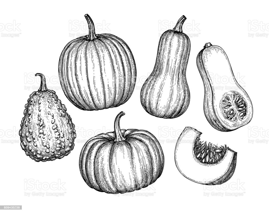 Set of pumpkins royalty-free set of pumpkins stock illustration - download image now