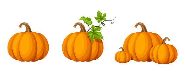 Set of pumpkins. Vector illustration. Vector set of orange pumpkins isolated on a white background. pumpkin stock illustrations