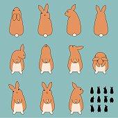 Set of rabbit standing poses.