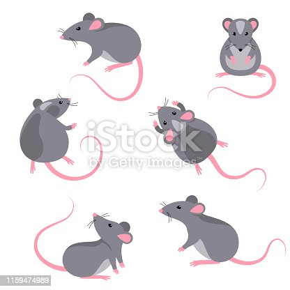 Set of rats characters isolated on white. Vector illustration. Symbols of 2020 Chinese New Year.