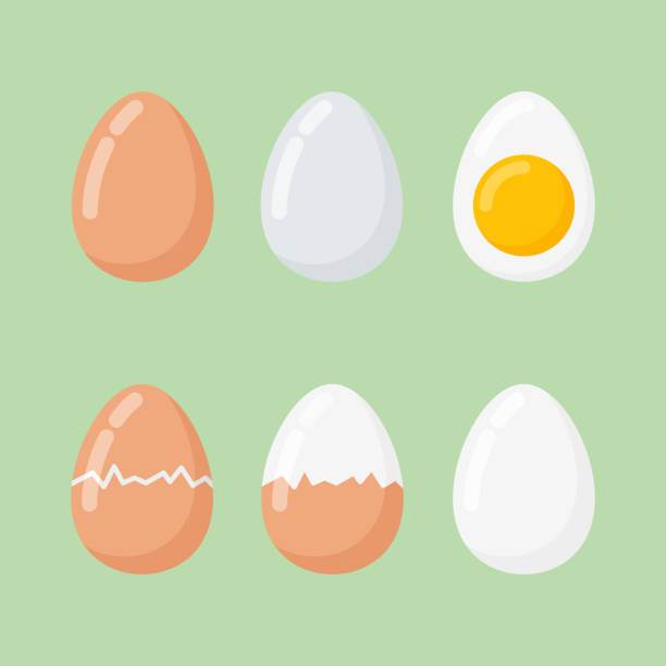 Set of raw and boiled eggs isolated on green background. Set of raw and boiled eggs isolated on green background. Flat style vector illustration. animal stage stock illustrations