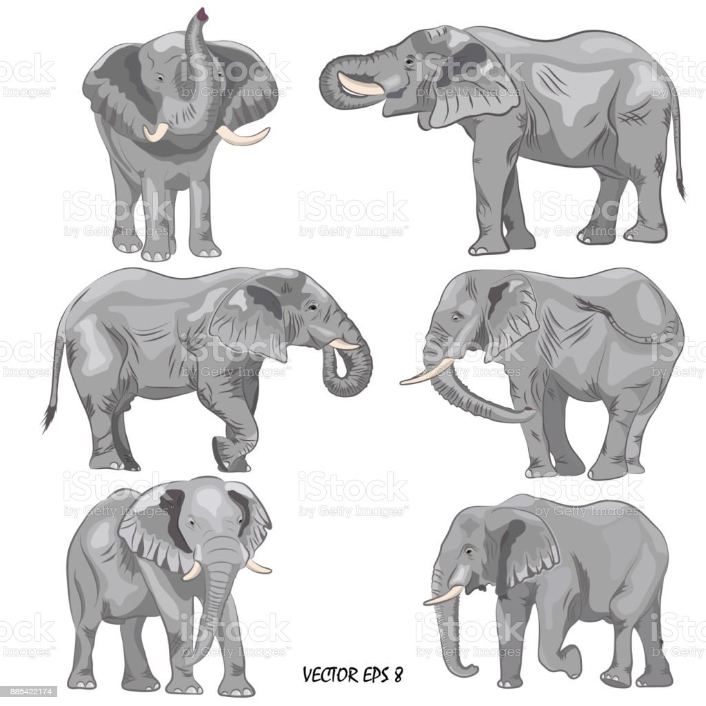 A set of realistic african elephants