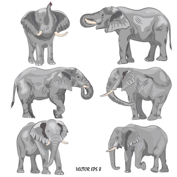 a set of realistic african elephants - elephant stock illustrations