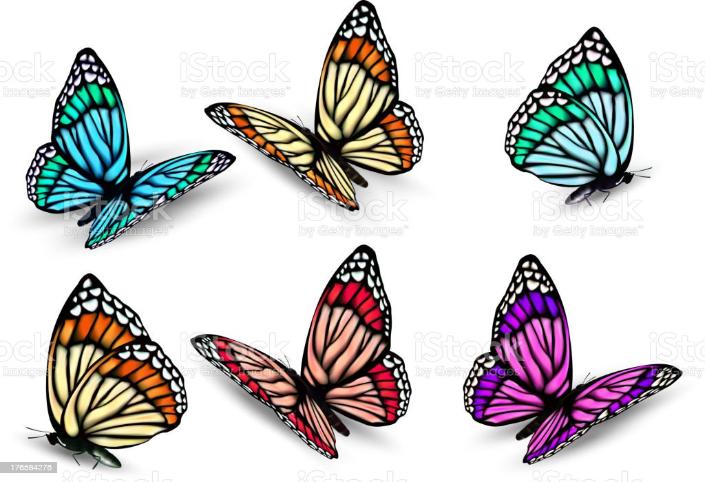 Set of realistic colorful butterflies. Vector royalty-free stock vector art