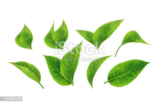 Set of Realistic Green Leaves Collection. Spring.Element for design, advertising, packaging products white background 3d illustration. vector