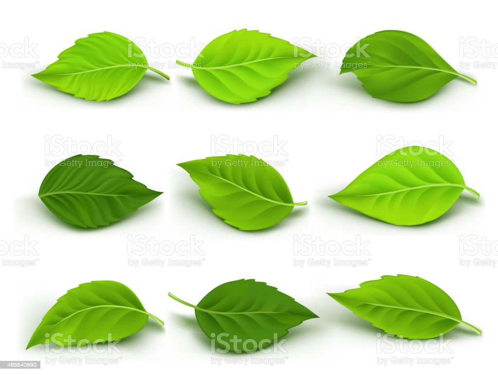 Set of Realistic Green Leaves Collection vector art illustration