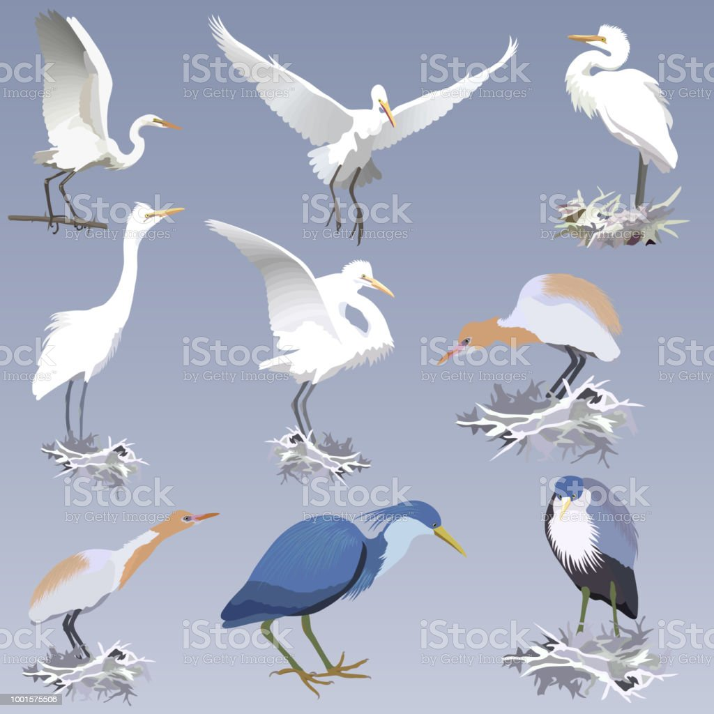 set of realistic herons of different species in different postures