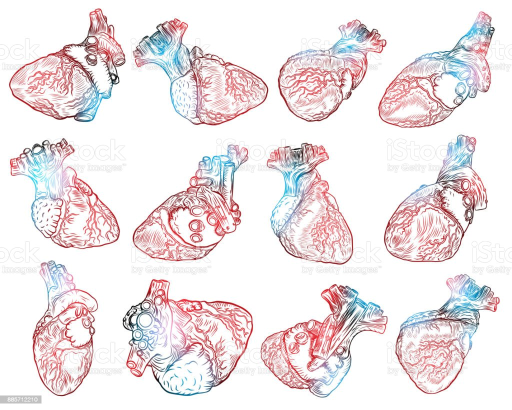 Set Of Realistic Human Heart Drawings Tattoo Art Dot Work Design For