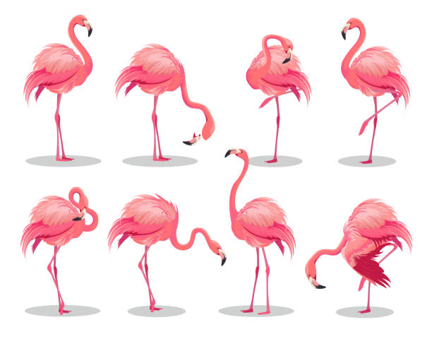 Set of realistic pink flamingos. Exotic bird in different poses. Flamingos with beautiful pink wings. Vector illustration Set of realistic pink flamingos. Exotic bird in different poses. Flamingos with beautiful pink wings. Vector illustration flamingo stock illustrations