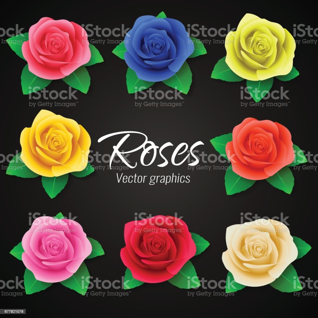 A set of realistic roses in different colors. Vector graphics royalty-free a set of realistic roses in different colors vector graphics stock vector art & more images of arts culture and entertainment