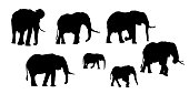 Set of realistic silhouettes of adult and young elephant. Isolated on white background - vector