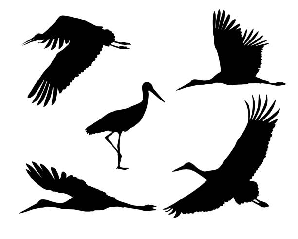 Set of realistic silhouettes stork or heron, flying and standing - vector Set of realistic silhouettes stork or heron, flying and standing - vector heron stock illustrations