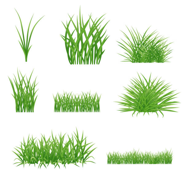 ilustrações, clipart, desenhos animados e ícones de jogo de elementos realísticos da grama verde do verão. gramado e cachos. isolado no fundo branco - gramado terra cultivada