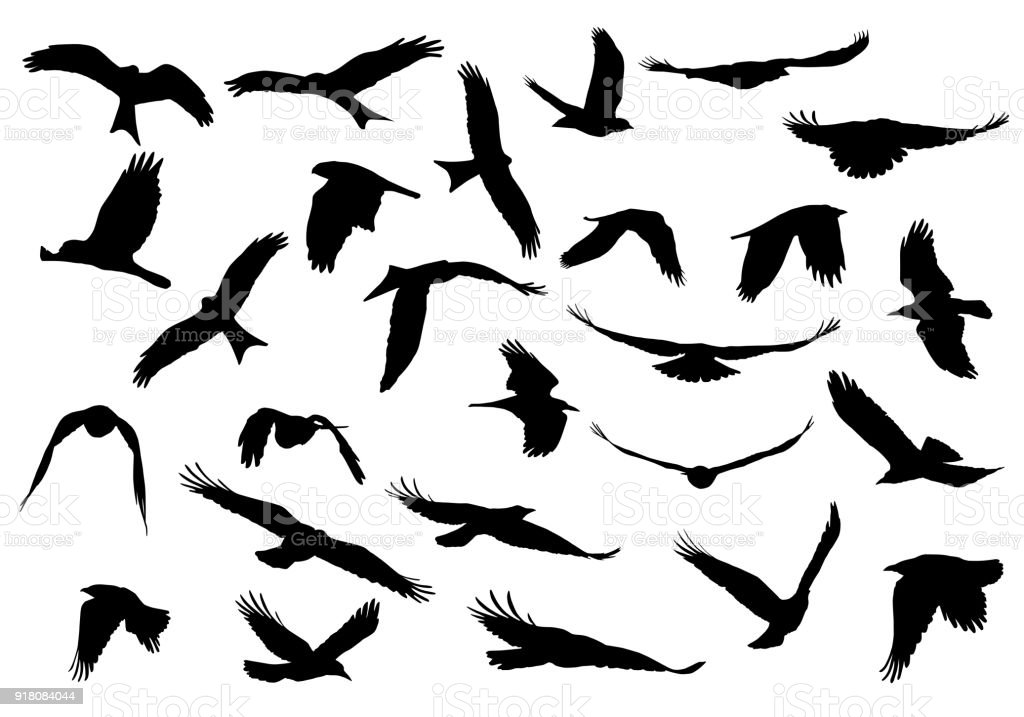 Set of realistic vector illustrations of silhouettes of flying birds of prey isolated on white background vector art illustration