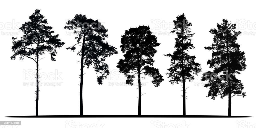 Satz von realistischen Vector Silhouetten der Nadelbäume - isoliert auf weißem Hintergrund – Vektorgrafik