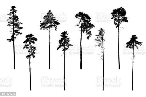 Free araucaria Images, Pictures, and Royalty-Free Stock
