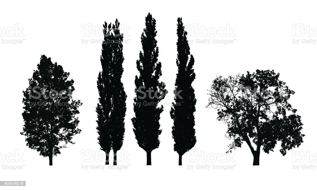 Set of realistic vector silhouettes of deciduous trees isolated on white background vector art illustration