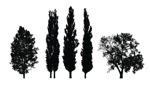 satz von realistischen vector silhouetten von laubbäumen isoliert auf weißem hintergrund - buchenholz stock-grafiken, -clipart, -cartoons und -symbole