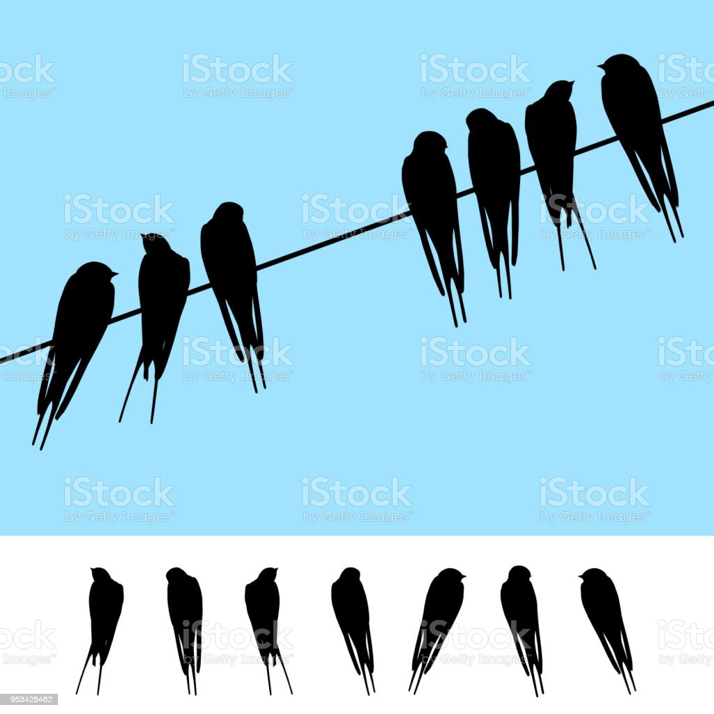 Set Of Realistic Vector Silhouettes Of Swallows Sitting On A Wire ...