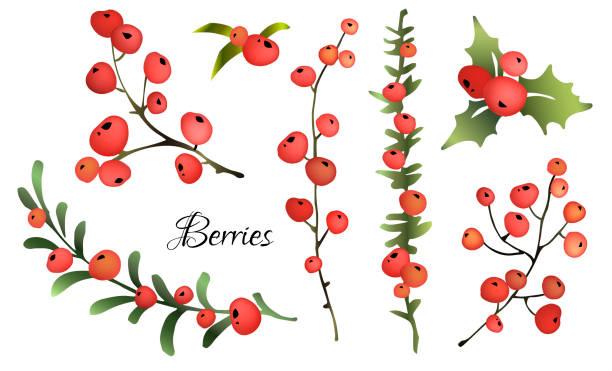 ilustraciones, imágenes clip art, dibujos animados e iconos de stock de conjunto de bayas rojas. - arándano rojo fruta baya