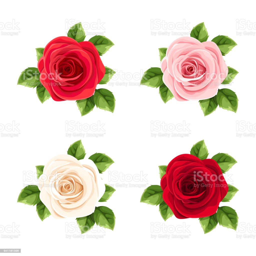 Set of red, pink and white roses. Vector illustration.
