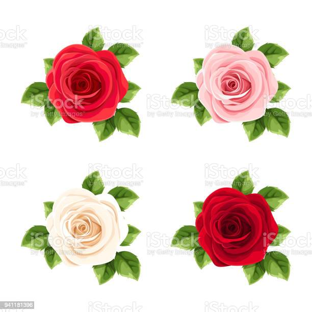 Set of red pink and white roses vector illustration vector id941181396?b=1&k=6&m=941181396&s=612x612&h=1ryquudrr83vxrjkhmjtufcak zf9hqi5mkmiappfv4=