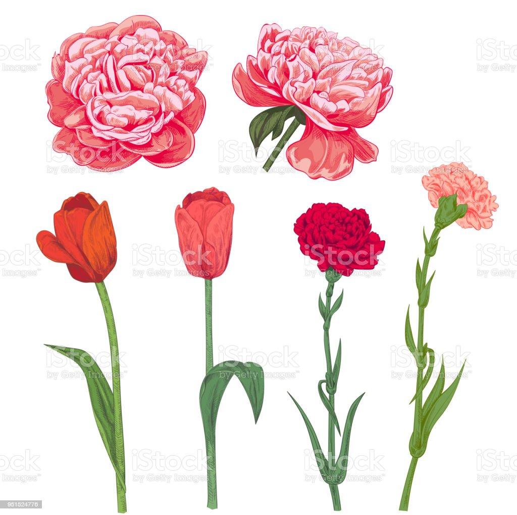 pfingstrose zeichnen blumen zeichnung, satz von rot rosa frühling garten blumen nelke pfingstrose tulpe auf, Design ideen