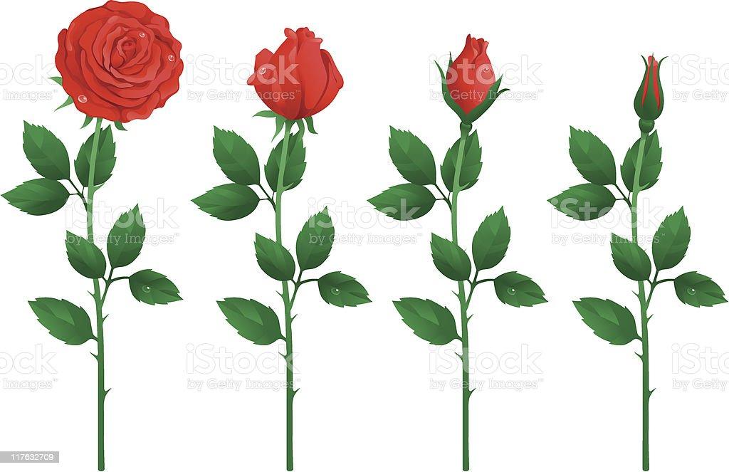 set of red roses vector art illustration