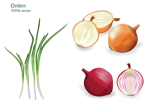 Set of red, yellow and green onion. Realistic 3d image of fresh onions of different colors. scallion stock illustrations