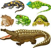 Set of reptile animal illustration