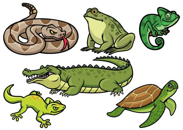 set of reptile cartoon illustration - turtle stock illustrations